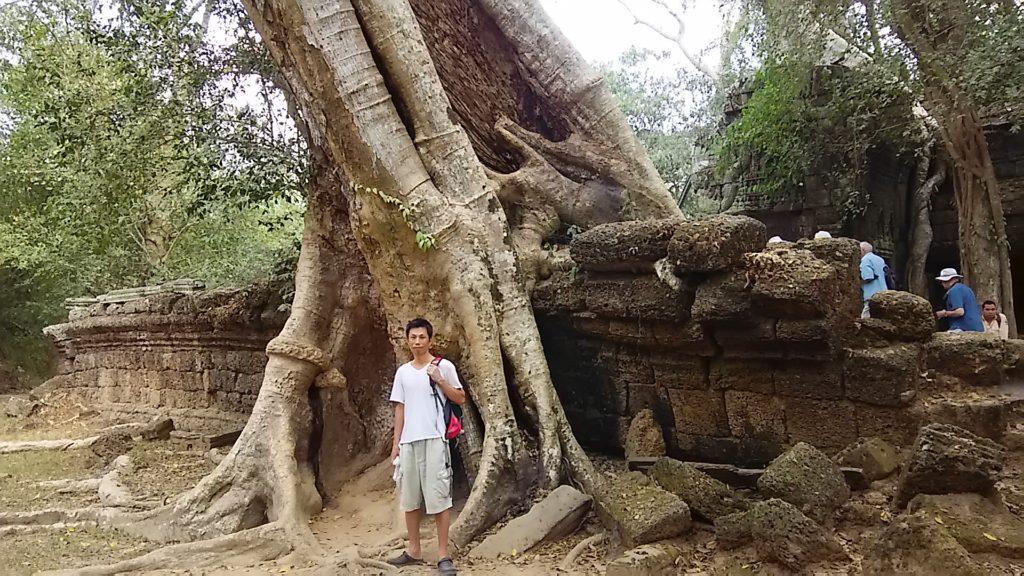 タ・プローム寺院 木の根と壁