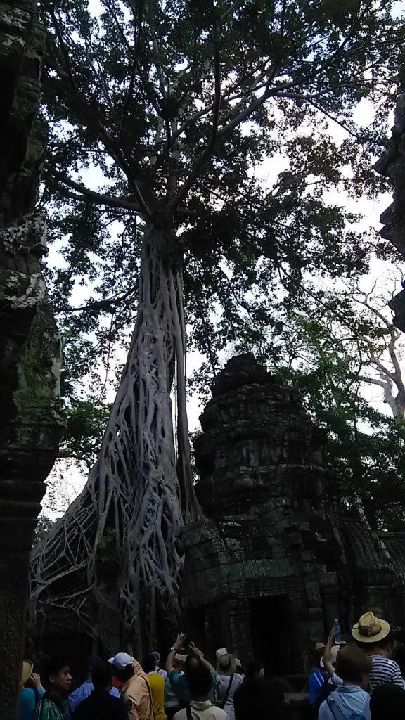 タ・プローム寺院 遺跡5