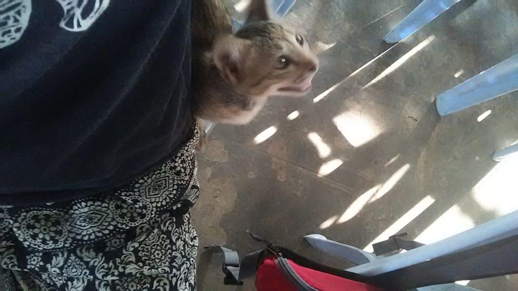 カンボジア 子猫2