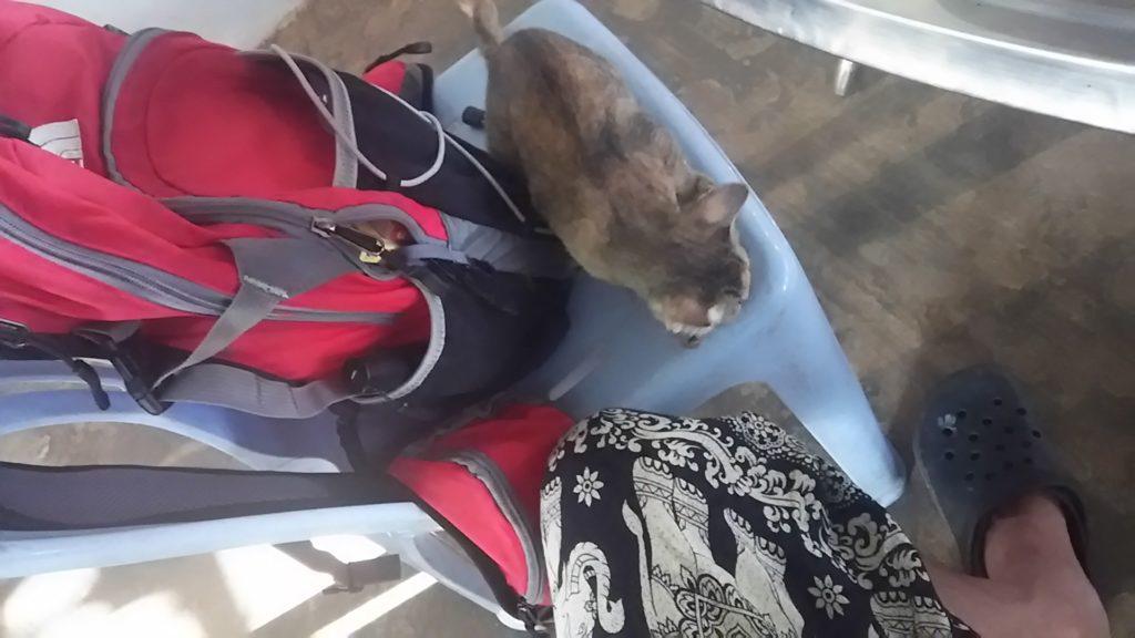 カンボジア 子猫出会い
